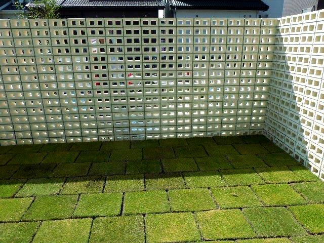 20150918庭の芝生